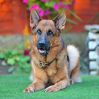 Yogi-DOG SHOOT NAMES FLR 726.jpg