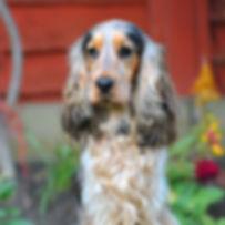 TroiAsti-DOG SHOOT NAMES FLR 858_B.jpg