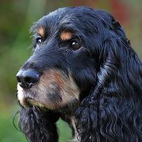 Troi-DOG SHOOT BEM 554.jpg