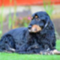 Troi-DOG SHOOT NAMES FLR 653.jpg