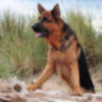 Yogi-DogWalk_150.jpg
