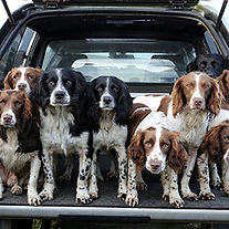 WorkingSpaniels2016-2.jpg