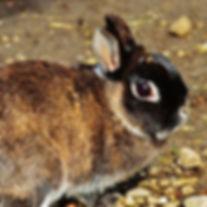 rabbit-3595528_1280.jpg