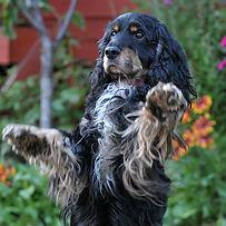 Troi-DOG SHOOT BEM 589.jpg