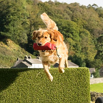 Jeeves-coniston hounds - web -2276.jpg