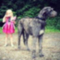 RHODRYDeerhound.jpg