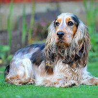 TroiAsti-DOG SHOOT NAMES FLR 772.jpg