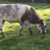 COWS-IMG_1851.jpg