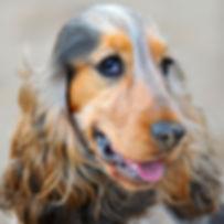 TroiAsti-DOG WALK 161.jpg