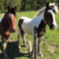 HORSE-40599014_320294968705434_307424555