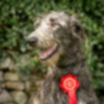 RHODRYDeerhound2.jpg