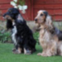 TroiAsti-DOG SHOOT BEM 743.jpg