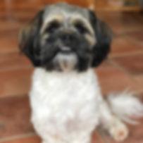 Freddie-image00001.jpeg
