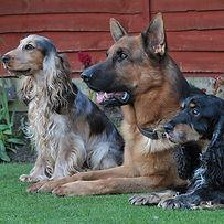 TroiAsti-DOG SHOOT BEM 728.jpg
