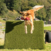Jeeves-coniston hounds - web -2277.jpg