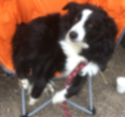 LUCY-IMG_2680.png