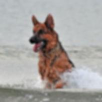 Yogi-DogWalk_084.jpg