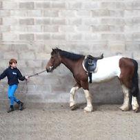 HORSE-BellaMay20151stview.jpg
