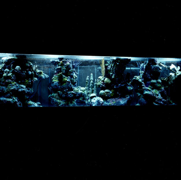 Custom Aquariums and Coral Reefs