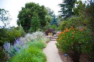 beautiful custome contemporary organic landscape design at silicon valley home