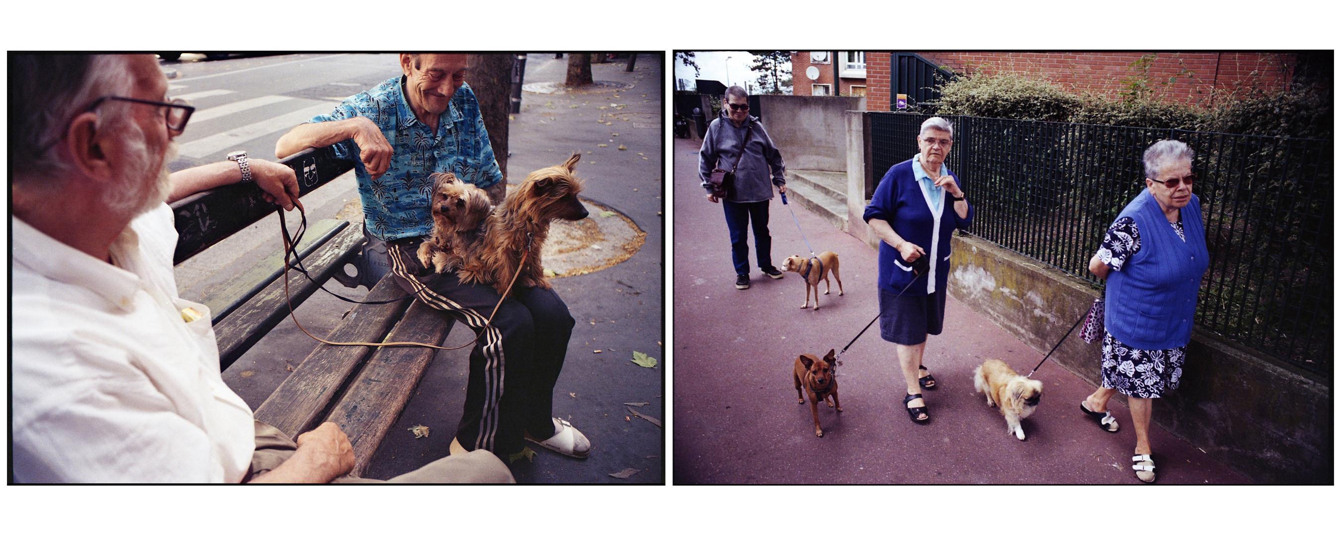 Duo_chiens.jpg