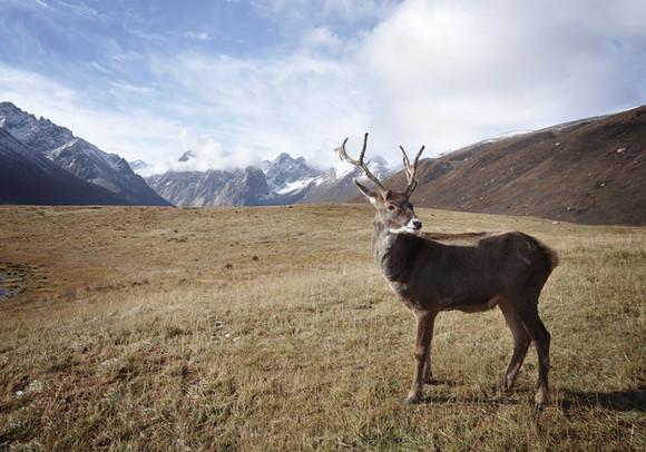 Berge und Deer