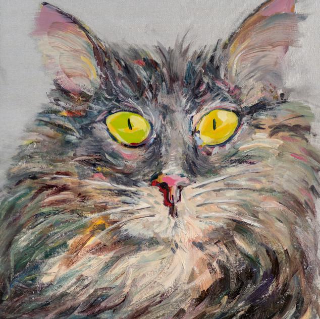 Mischievous cat