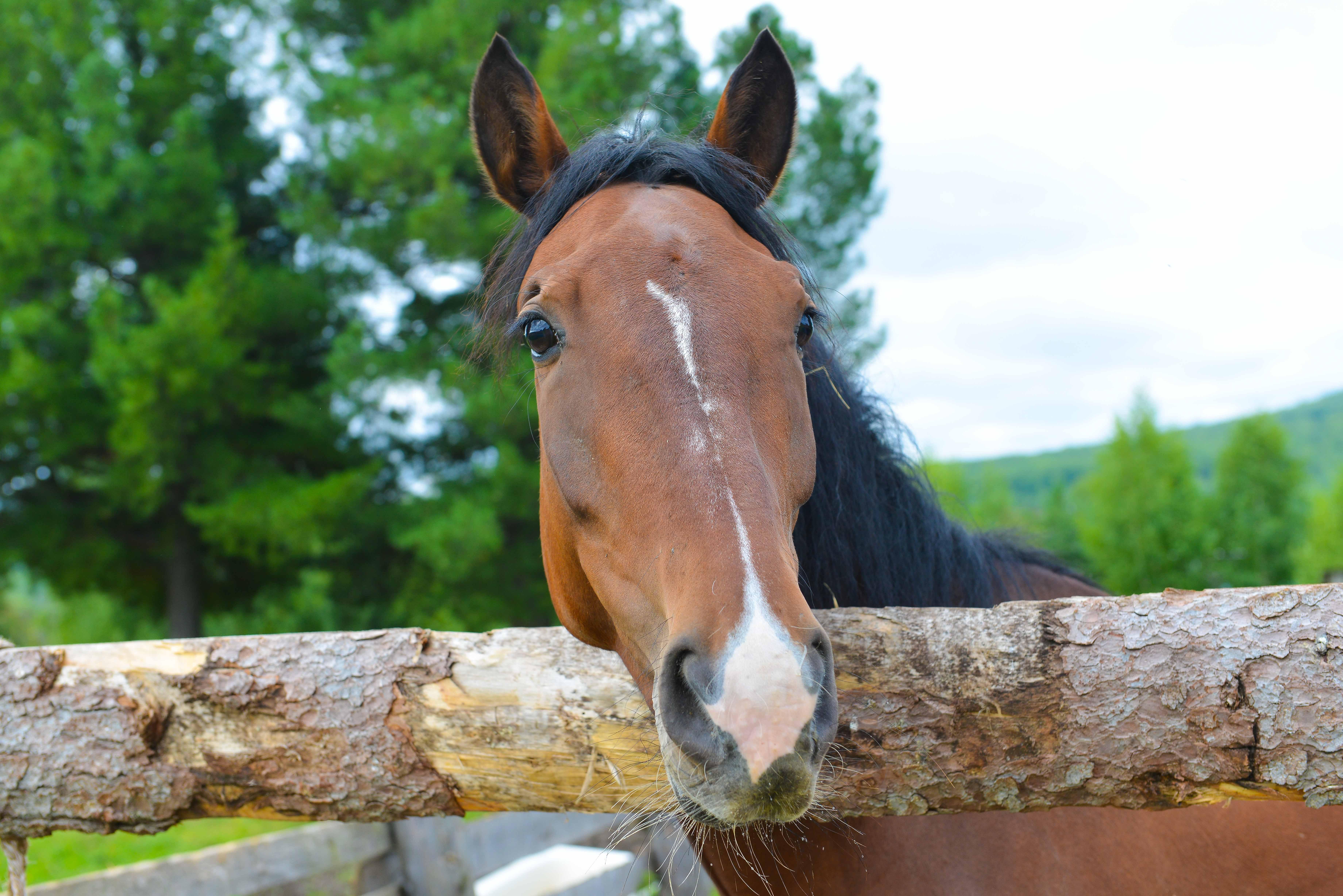 Наши лошадки