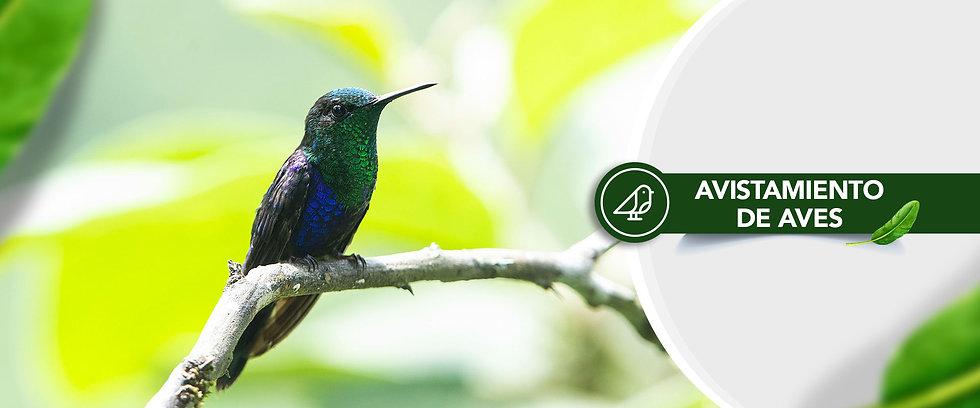 Banner-Destinos-Viajes-CHE---Avistamiento-de-Aves.jpg