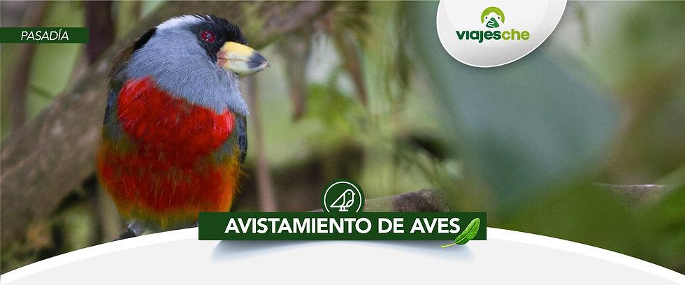 Viajes-Che-Avistamiento-Aves-Valle-del-C