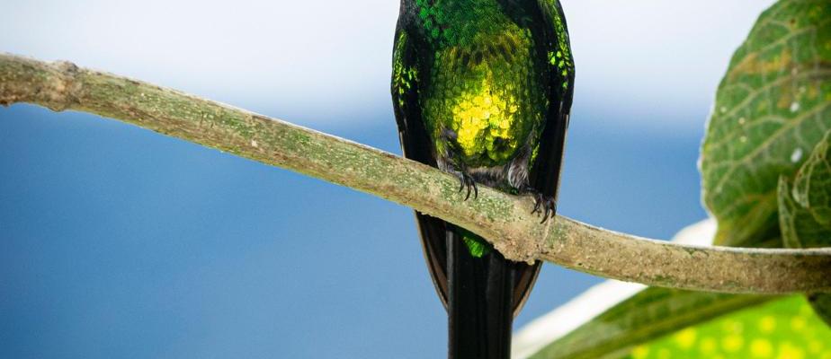 avistamiento-de-aves-viajes che-Valle-de