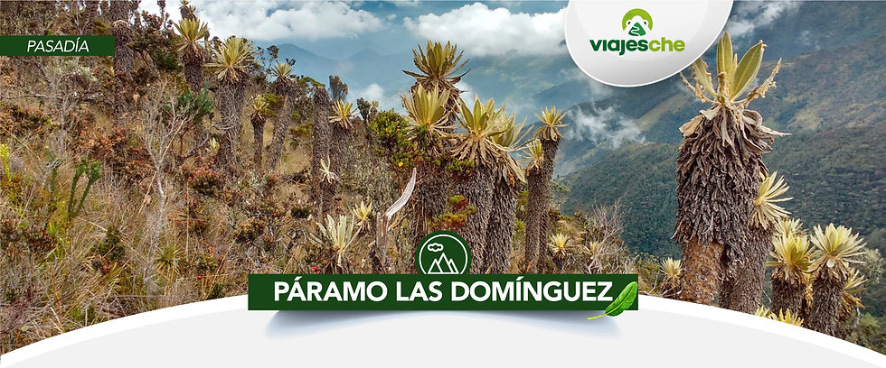 Viajes Che-Páramo-Los-Dominguez-Valle d