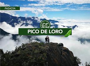 Viajes Che-Pico-de-Loro-Valle del Cauca.