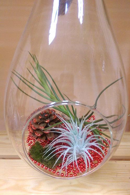 Новогодний флорариум-капля с 3-мя тилландсиями