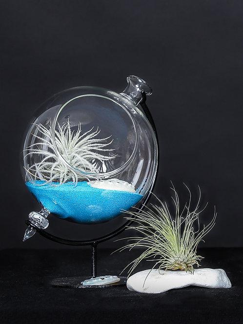 Флорариум - глобус