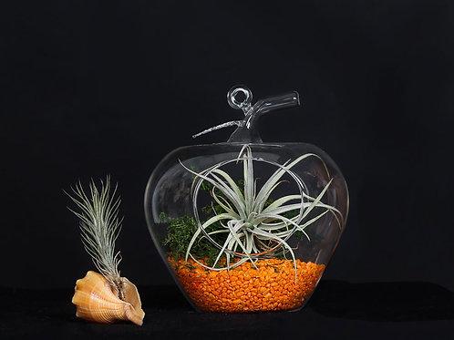 Флорариум Яблоко Большое