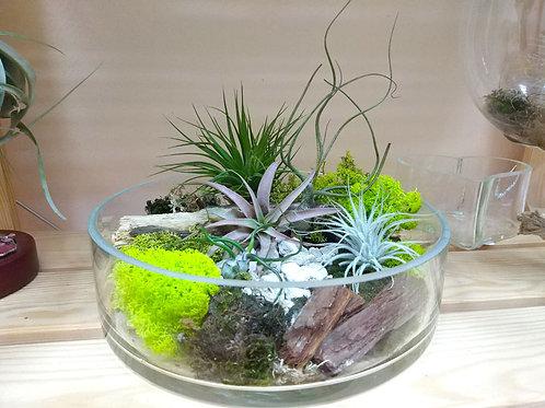 Флорариум плоский с 5-ю атмосферными тилландсиями