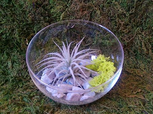 Флорариум с атмосферной тилландсией Текторум