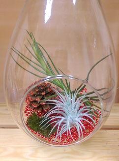 Новогодний флорариум