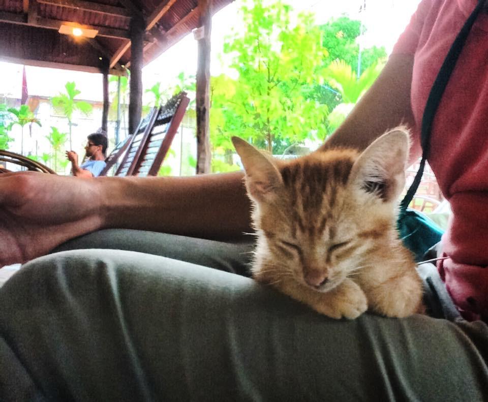My Cambodian Companion