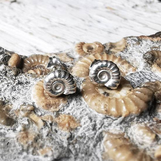 Tiny ammonite fossil stud earrings