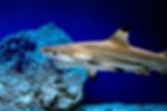shark-4729554_960_720.webp