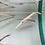 Thumbnail: Longnose Gars
