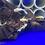 "Thumbnail: L144 Longfin Blue Eyed Bristlenose 1-1.5"" [ 5 + 1 FREE ]"