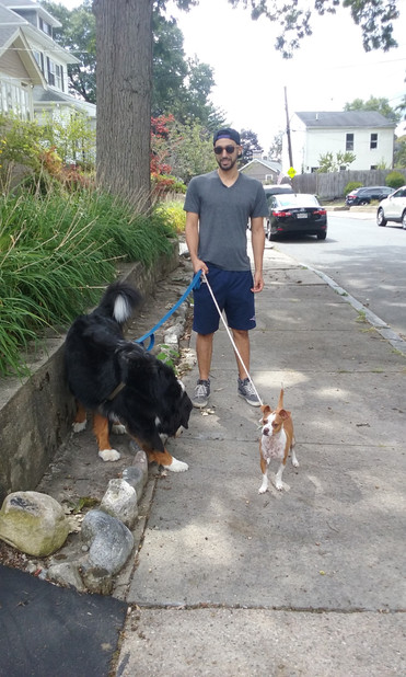 No dog to big or to small