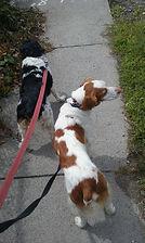 Group Dog Walk.jpg