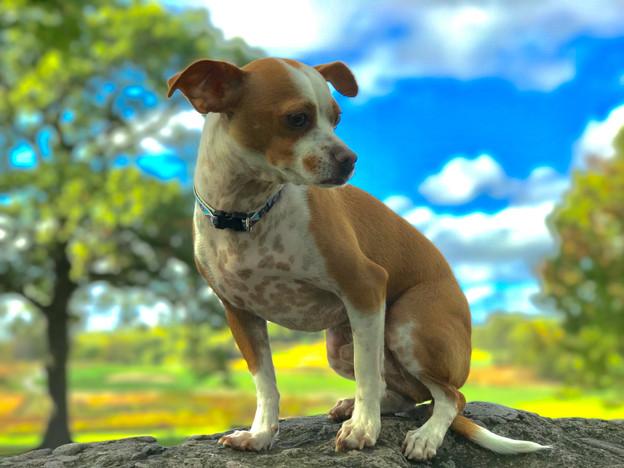 Dog Walker Jamaica Plain