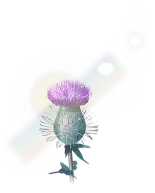 RHC-Thistle-Full.png