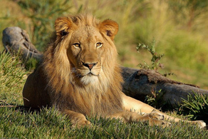 Visit Gir National Park & Wildlife Sanctuary - Gujarat   Luxury Travel and Vacations