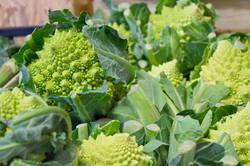 ortaggi biologici, verdura bio